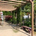 宝寿院の藤棚